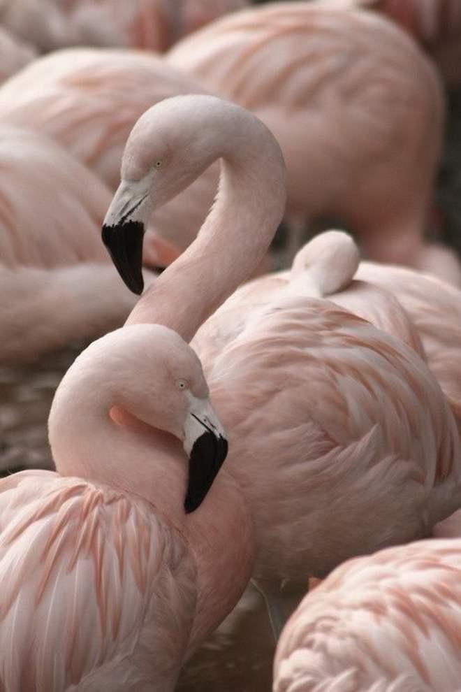 flamingo-pink-millennial-toca-lola