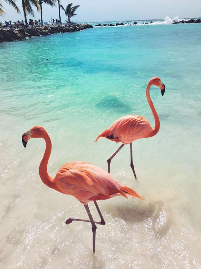 flamingo-tendencia-infantil-toca-lola-55